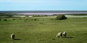 Lagune de sel couleur rose