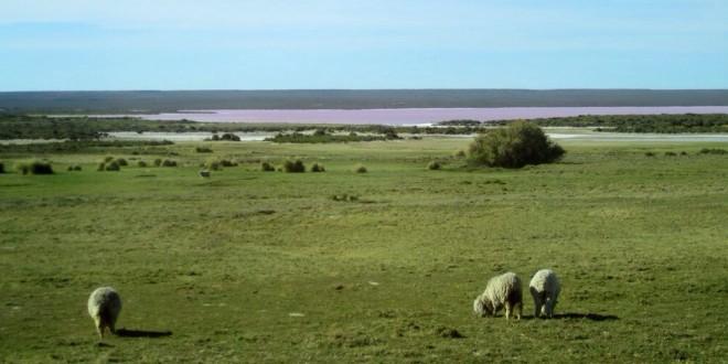 Retour en Argentine, un RDV très attendu
