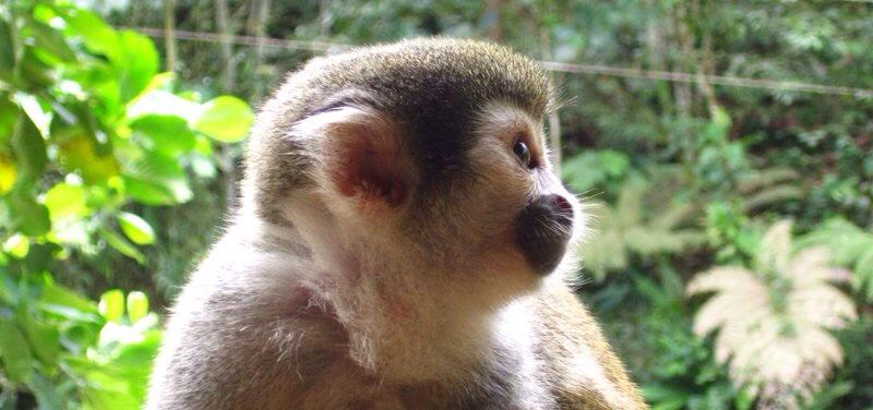 Mon sejour au centre de secours des animaux d'Amazonie